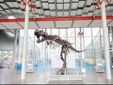 Four General Admission Tickets to the California Academy of Sciences