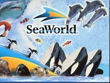 SeaWorld - 4 Single Day Admission Tickets