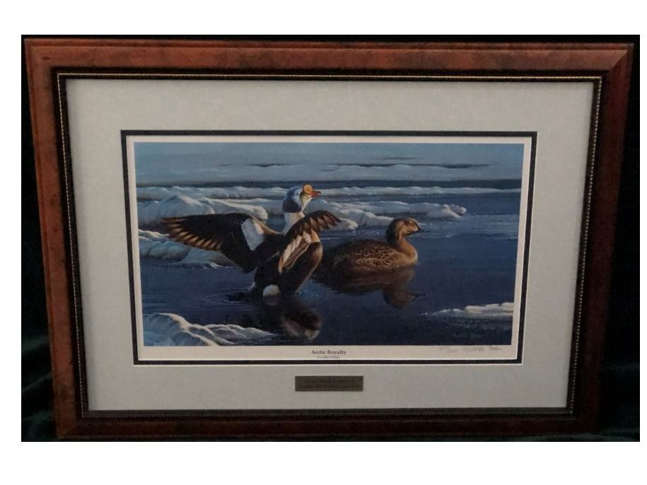 Framed Print ''Arctic Royalty'' by Cynthia Fisher