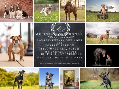 Professional Pet Photo Session $400 Wall Art