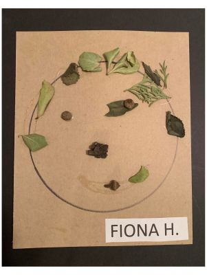 Fiona Harris - Self Portrait from nature