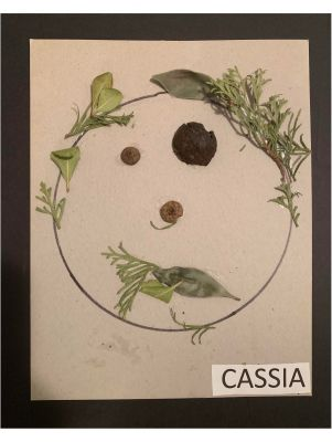 Cassia - Self Portrait from nature