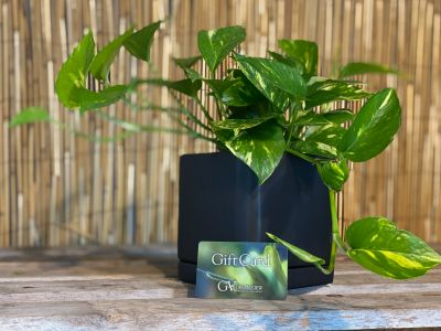 Green View Gift Card & Plant