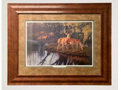 Gorgeous Framed Picture of Deer