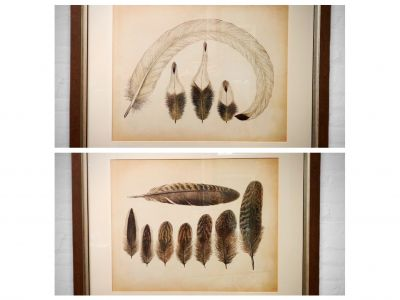 Two Large Feather Pictures from The Gift Shop
