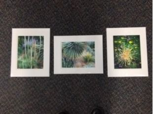 Set of Three 12x16 Color Matted Photos - In...