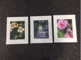 Set of Three 12x16 Color Matted Photos - Bl...